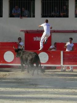 torro3